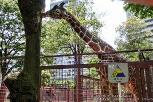 上野動物園へ行こう