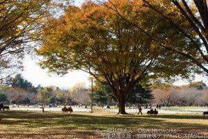 国営昭和記念公園に行こう!①