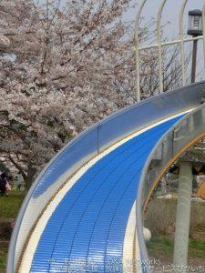 大島小松川公園へ行こう!①