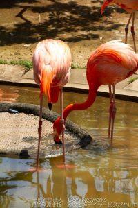 恩賜上野動物公園へ行こう!②